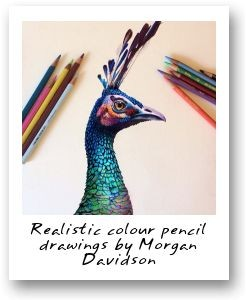 Realistic colour pencil drawings by Morgan Davidson