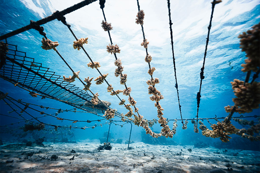 North Sails annonce deux nouveaux partenariats pour la protection des océans